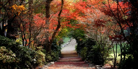Lindenderry Autumn Tree Walk